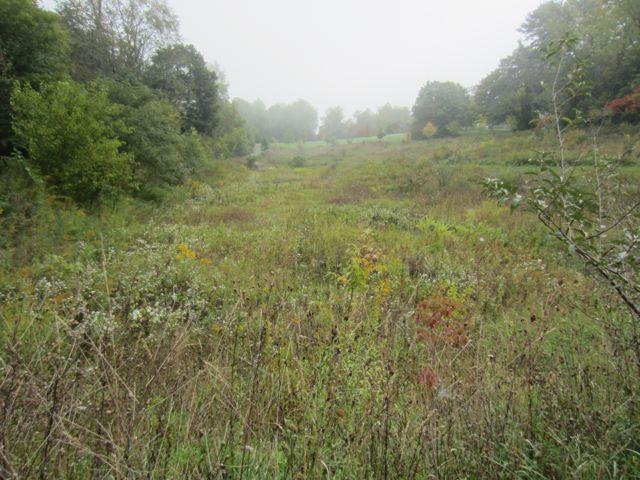 Meadow at Wong Park in Blacksburg