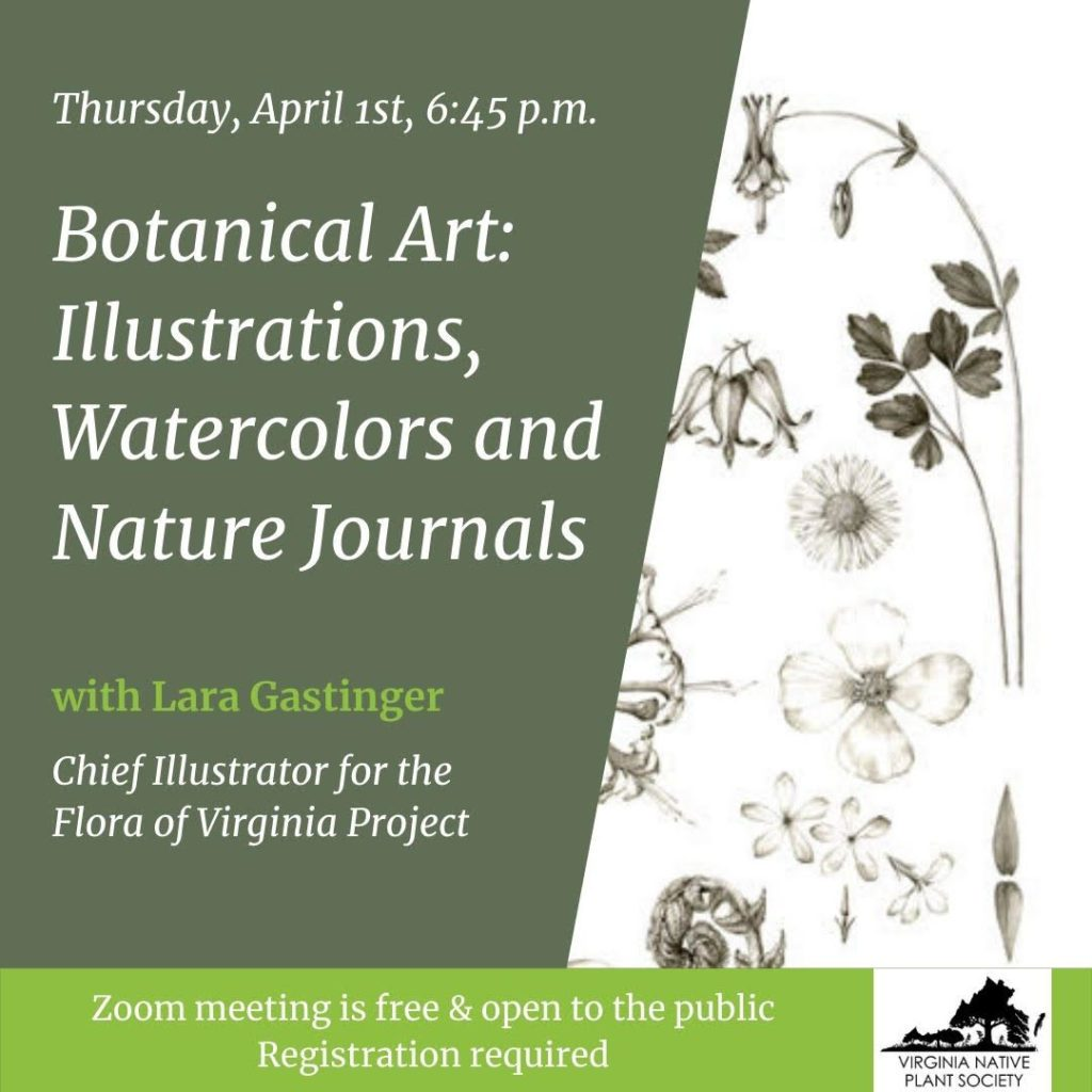 Pocahontas Chapter April Meeting – Botanical Art: Illustrations, Watercolors, and Nature Journals with Laura Call Gastinger