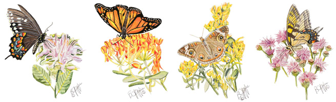 Butterflies with native plants