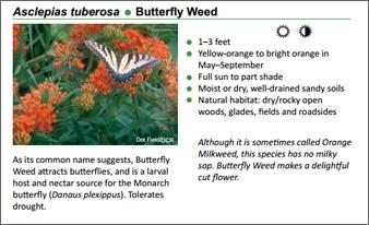 a description of various plants Description various plants for sale small type lilac tree, lilies, varigated climber bush, yucca, iris's, everbearing raspberries.