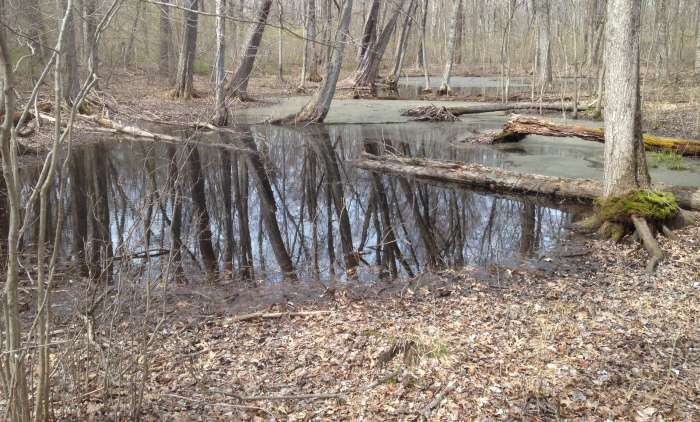 Spotted Turtle Spring Vernal Pool Habitat - 700x422 - Photo by USFWS