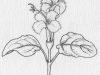 flower-alone2