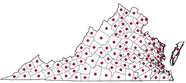 Distribution of Asclepias tuberosa in Virginia