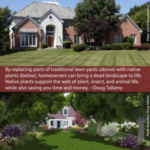 Native_Landscaping_Doug_Tallamy_Quote_Facebook_500x
