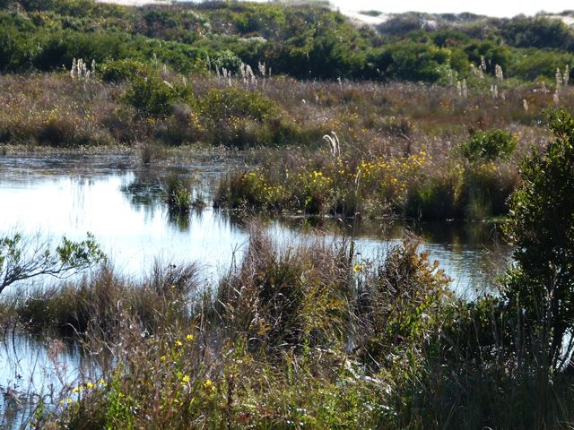 Impoundments destroyed natural ecology