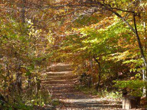 A leafy trail . . .