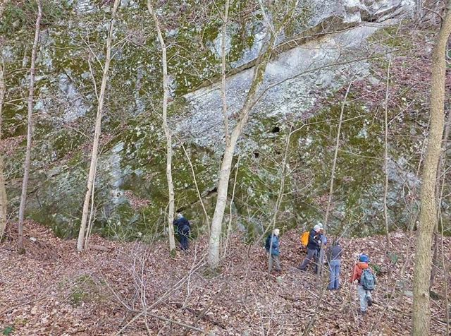 Massive, near-vertical limestone and dolomitic cliffs along the Potomac River C&O Canal towpath at Ferry Hill.  Photo by Steve Young.