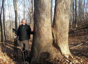 Rod Simmons discusses a giant cucumber tree for Hooley participants and tree lovers.