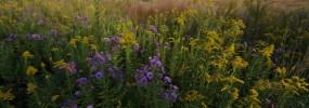 Virginia's rich biodiversity