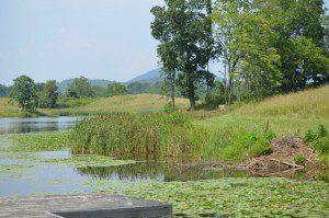 Virginia grasslands