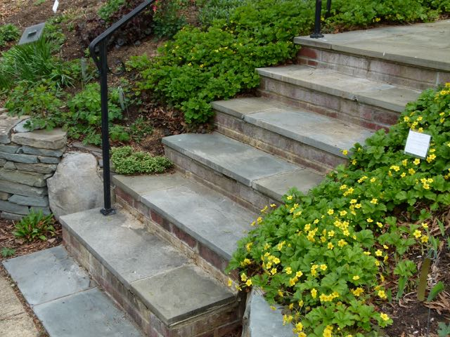 Barren strawberry, (Geum fragarioides), softens the framework of the steps and give a warm welcome to guests.
