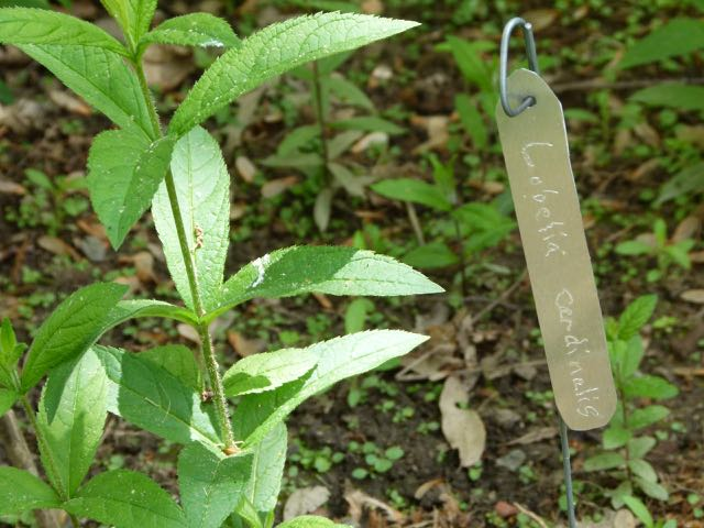 These homemade labels save money and will not fade in the weather.
