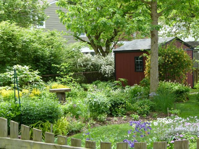 A sterile, resource gobbling lawn transformed into a beautiful yard that attracts birds and butterflies!