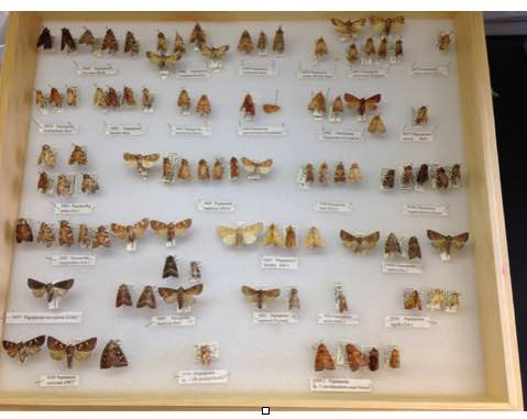 The Virginia Natural Heritage moth collection. Photo: C. Ludwig