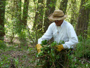 Alan Ford pulling invasive plants on Invasive Plant Removal Day last year.