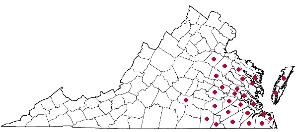 Distribution of Smilax walteri, courtesy of the Digital Atlas of  the Flora of Virginia.