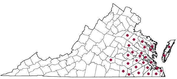 Distribution of Smilax walteri, courtesy of the Digital Atlas of the Flora of Virginia.