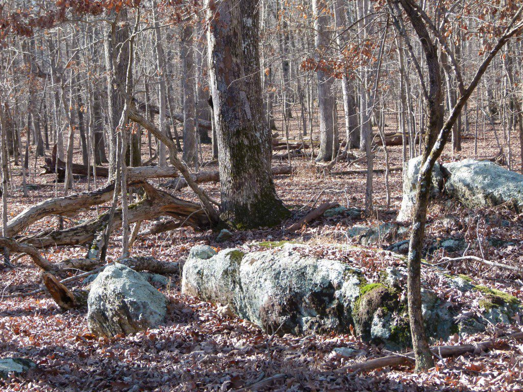 Serpentinite boulder outcrop in the stunted old growth forest.