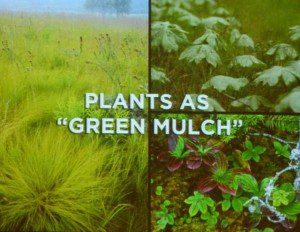 Green mulch (1)