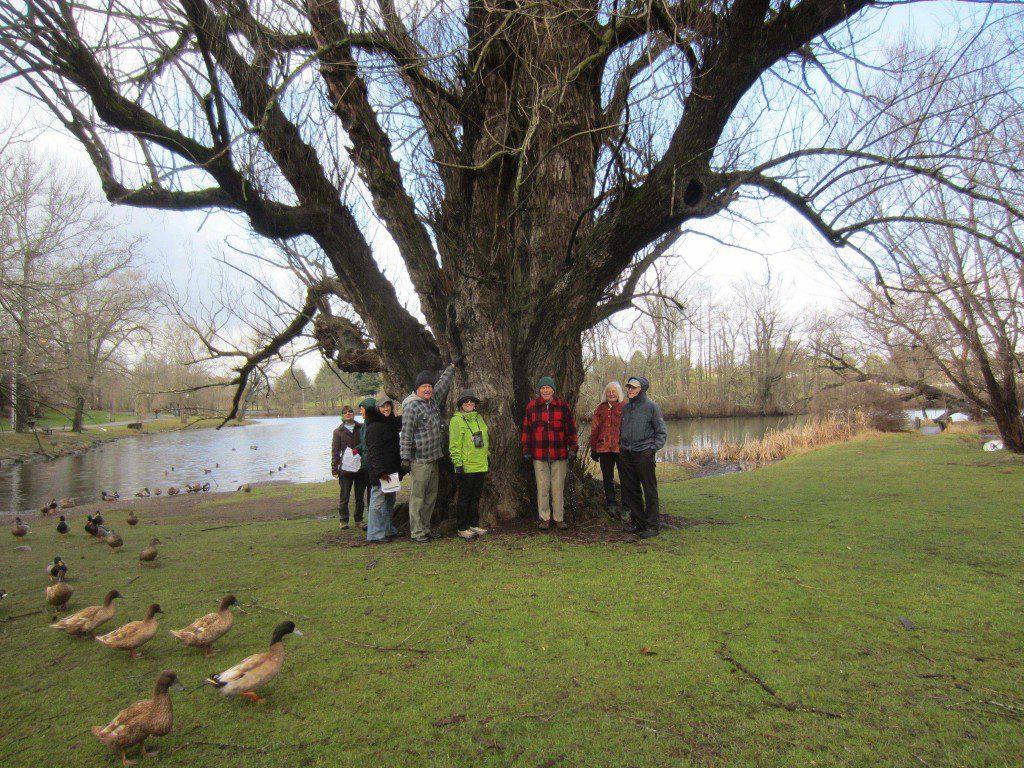 paperbark maple, Acer griseum, found in the Hahn Horticulture Garden at VT.