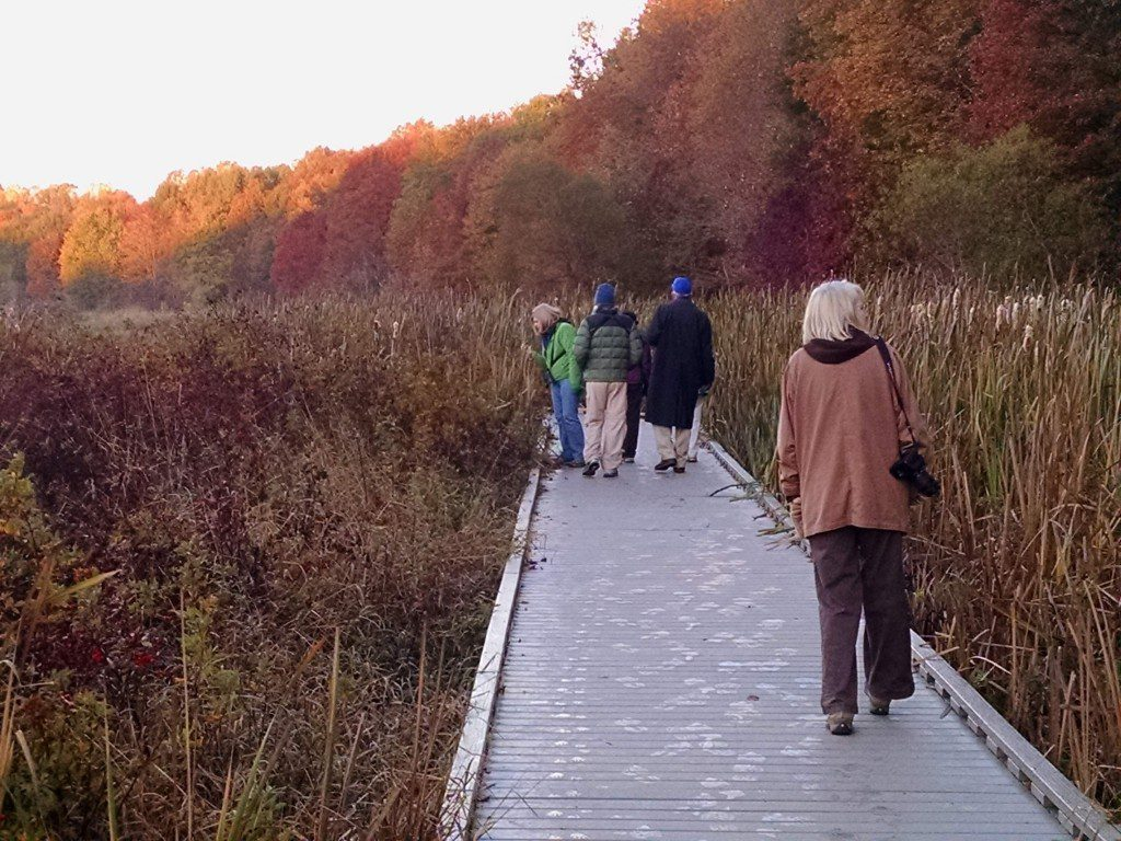 Monday morning bird walk at Huntley Meadows.