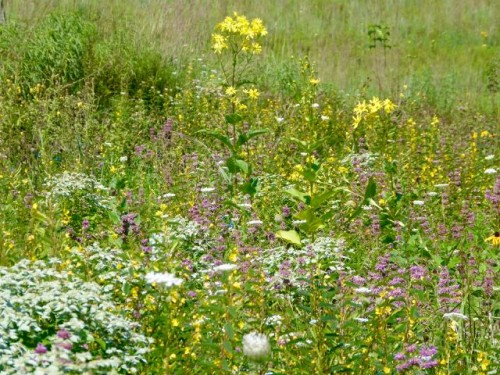Post-Wild Planting Solutions
