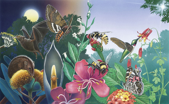 """The future flies on wings of pollinators"" This poster is made available by the U.S. Forest Service, U.S. Fish and Wildlife Service, Bureau of Land Management, Natural Resources Conservation Service, U.S. Botanical Gardens, and the NAPPC (North American Pollinator Protection Campaign).  Artist: Paul Mirocha"