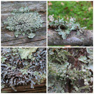 Lovin' the Lichens!
