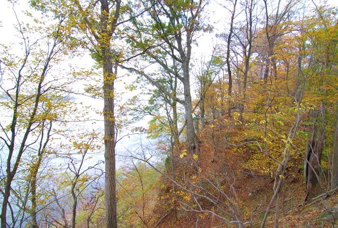 Steep rugged bluffs with Shumard Oak along the Potomac River at Chapman Forest.  Photo by R.H. Simmons.