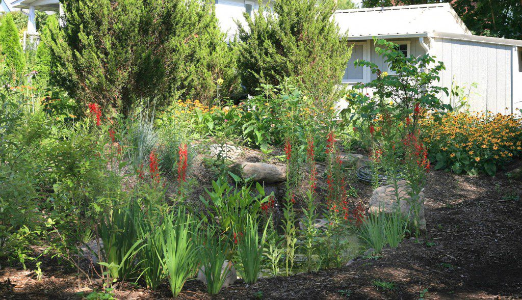 Cedars provide an excellent evergreen backdrop for a riot of color around a native plant pond garden.