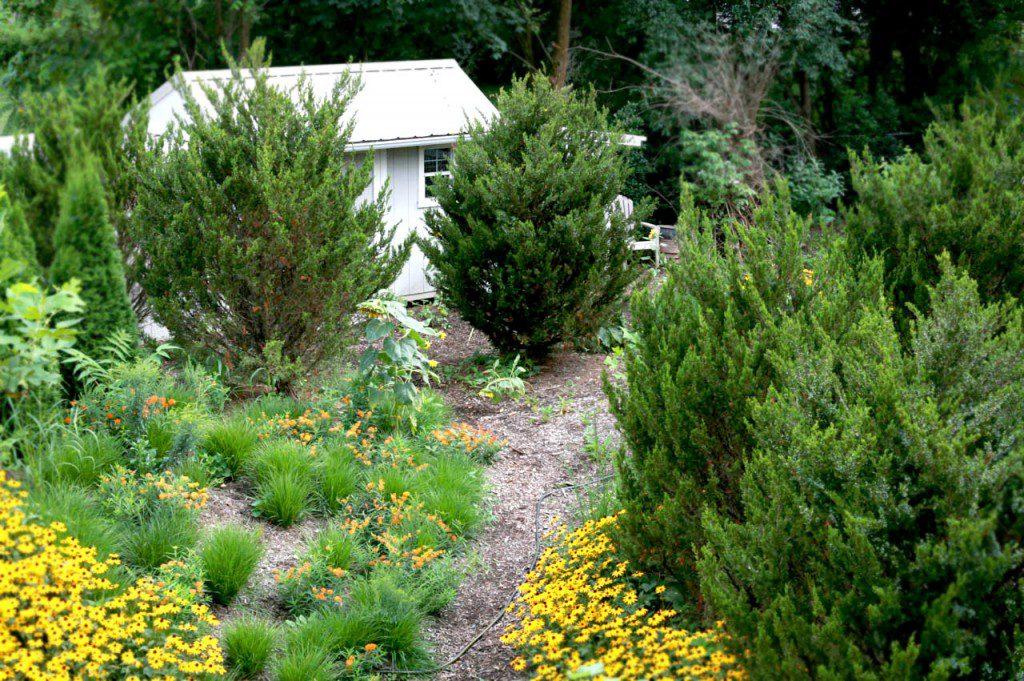 Cedars create privacy