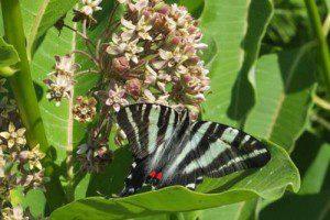 Habitat Garden - New Quarter Park