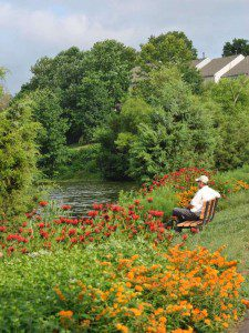 Tippecanoe Lake Native Plantings - Ashburn 1