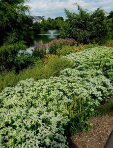 Tippecanoe Lake Native Plantings - Ashburn 2