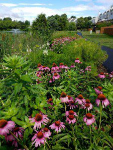 Tippecanoe Lake Native Plantings - Ashburn 3