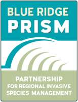 Blue Ridge Prism Logo
