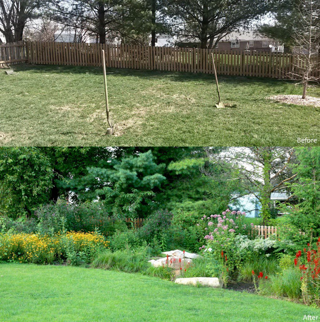 Lawn to Raingarden - A muddy backyard lawn area  becomes a functioning raingarden with framing boulders and lush native plantings that support insects and birds.
