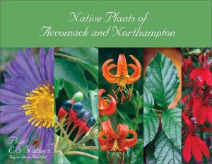 Native Plants of Accomack and Northampton