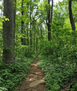 Appalachian Trail and Trees at Thompson WMA by Karen Hendershot