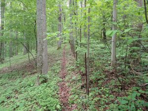 Deer Exclosure at SCBI - With Deer (left) vs Without Deer (right) Photo by Smithsonian Conservation Biology Institute