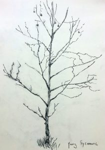 Young Sycamore Drawing by Susan Sharpe