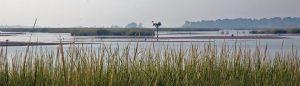 Salt Marsh at Prime Hook National Wildlife Refuge USFWS photo