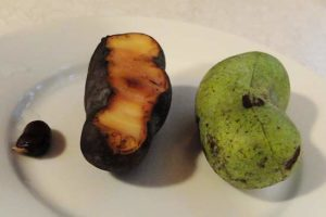 Pawpaw Fruit by Mary Lee Epps