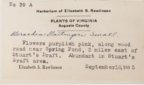 Elizabeth Rawlinson's Specimen Label for Gerardia